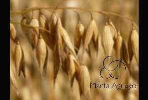 field-agriculture-harvest-cereals-87824-180x180